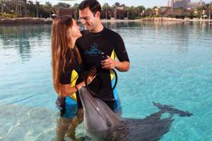 Предложение руки и сердца с помощью дельфина